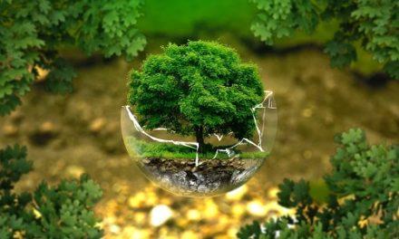 Comment la croissance verte de l'immobilier neuf est-elle soutenue?